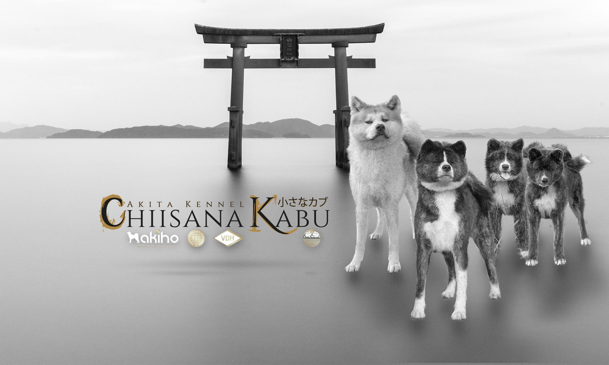 Chiisana Kabu